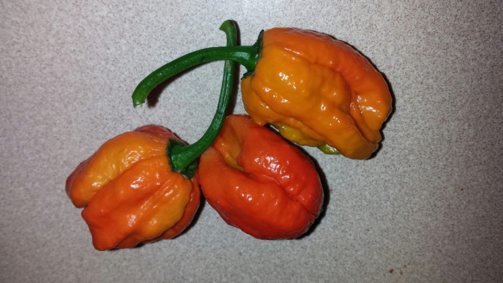 habanero-peppers-946635_1920